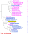 Phylogeny classic errors 3.png